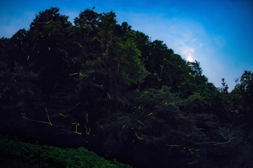 里山大木須を愛する会 - 1 (14)