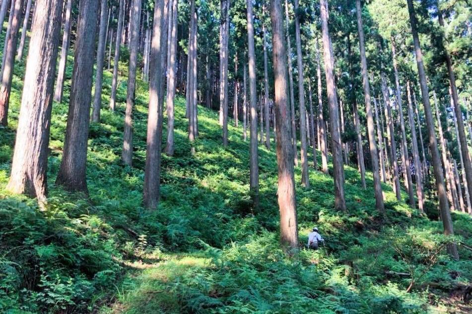 【西粟倉10の生き方:その5】<br>100年の森の経営者たちは<br>いつも未来を見据えて