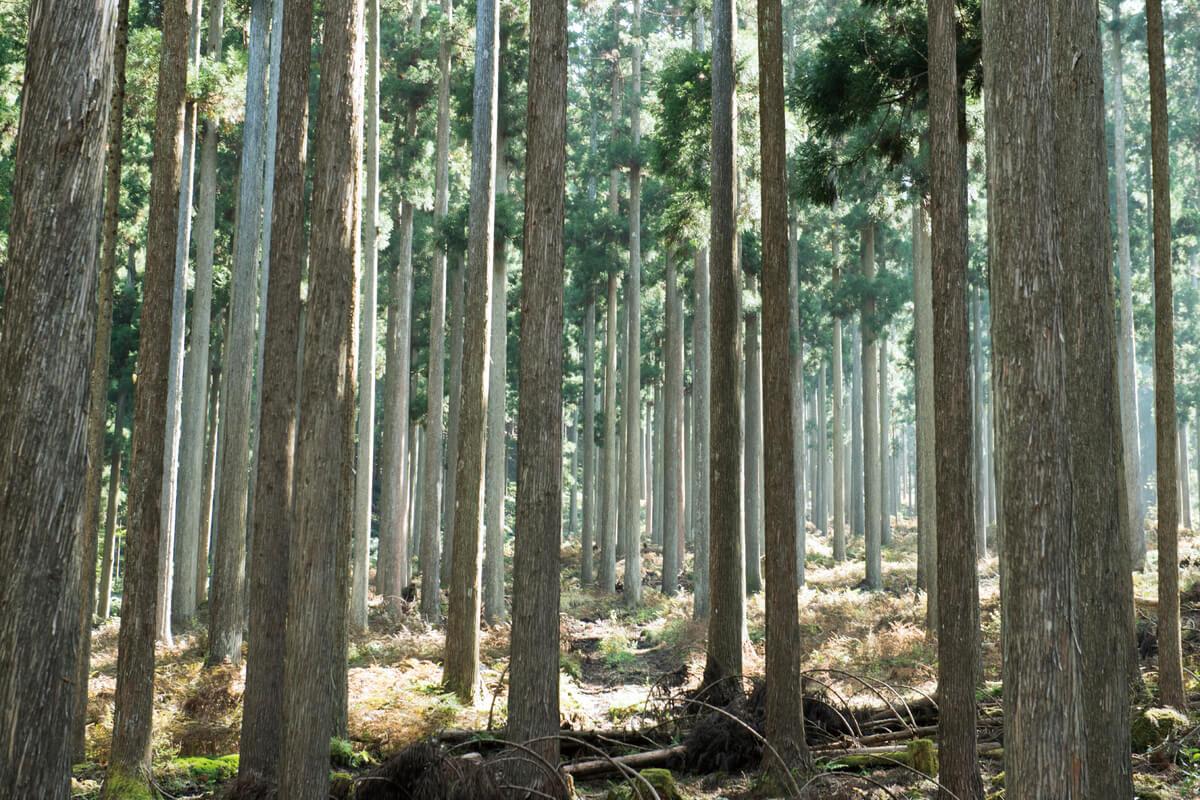 これからの林業を考えナイト