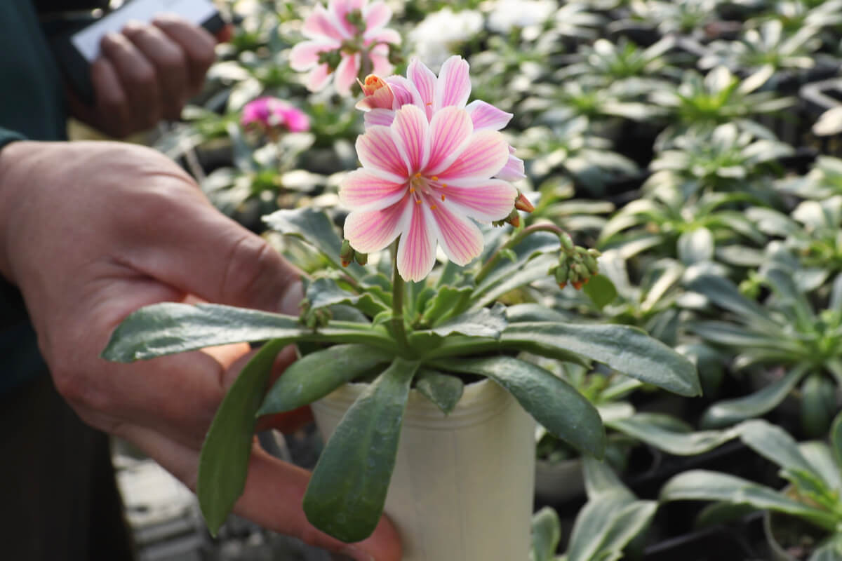 かわいい花が咲くように日々、植物と向き合う