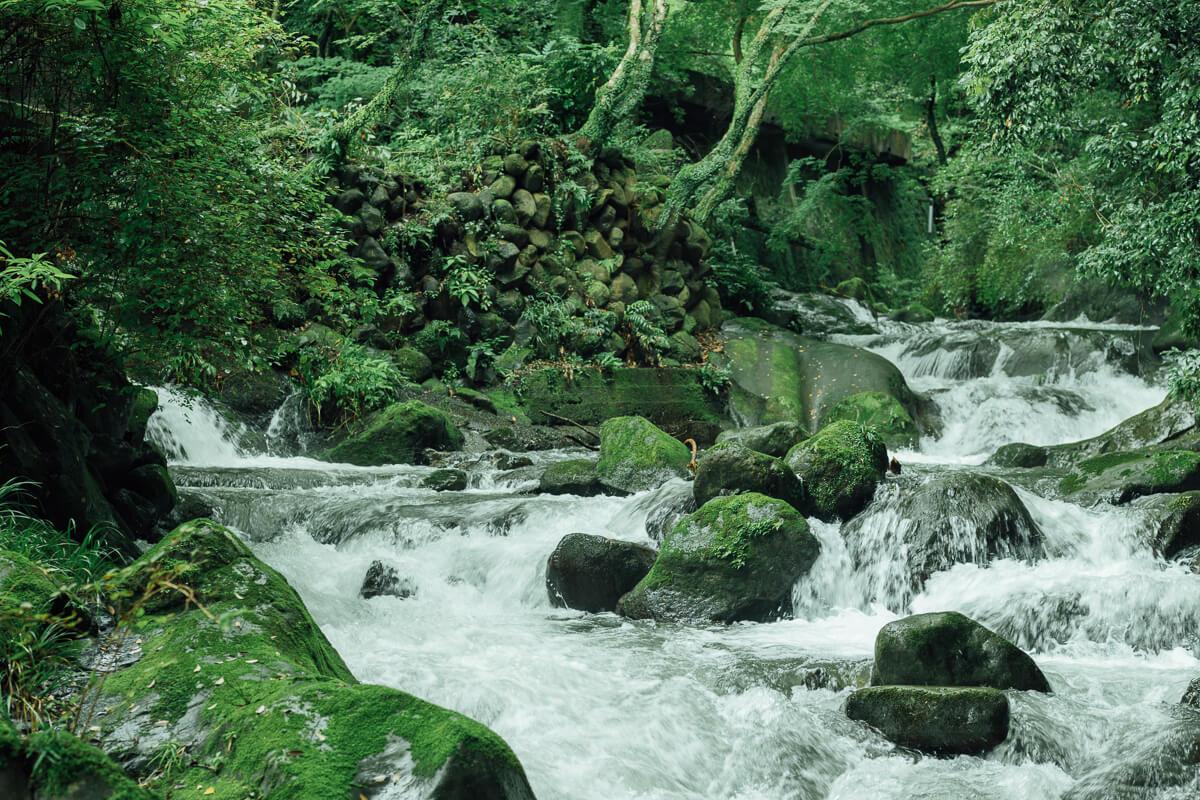 川と森の自然公園を本と温泉のリトリート施設に