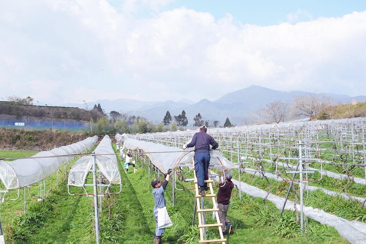 田んぼに木を植ゆるバカ常識にとらわれない醸造家南国でワインをつくる