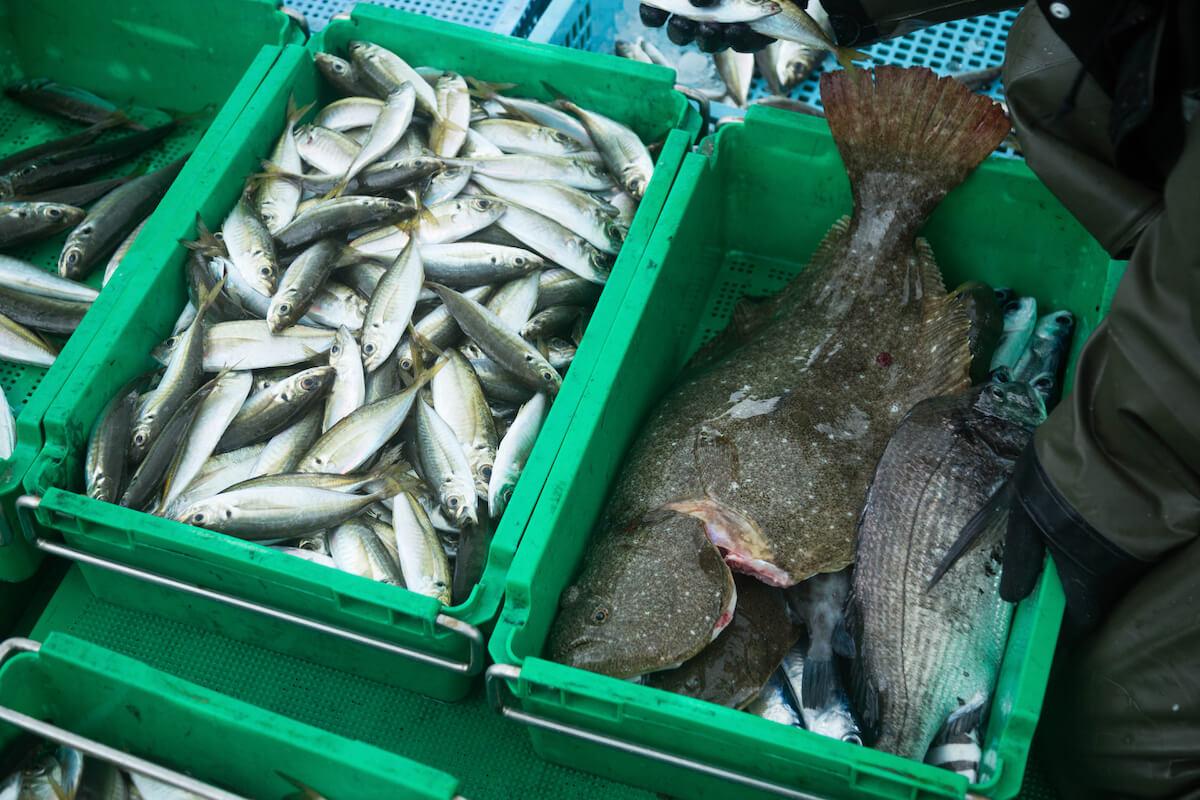 朝から晩まで3年間魚のことだけ考えたなら